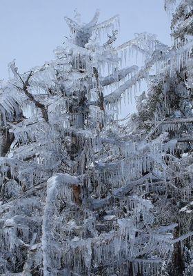 氷漬けの木06