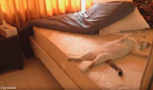 隣の部屋で寝てる猫04