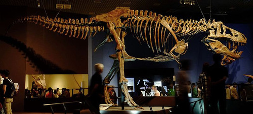 最大のティラノサウルス01