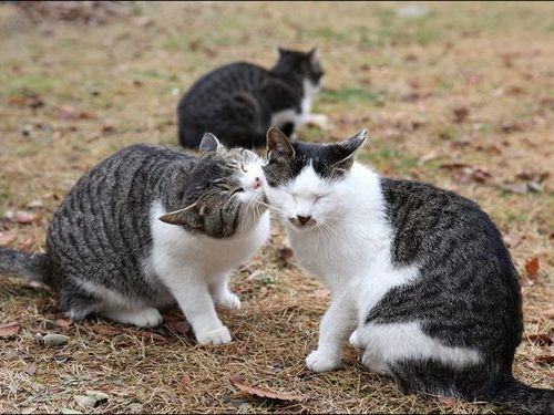 嫉妬する猫00