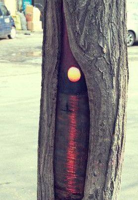 木の幹に絵を描くアート07