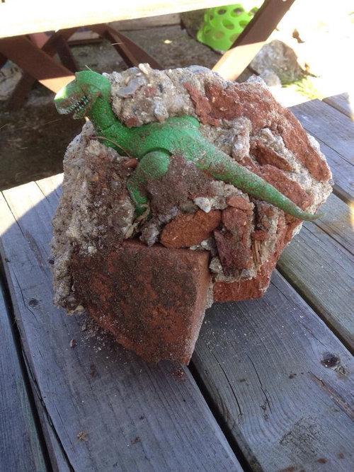 庭を掘っていたら恐竜が出てきた01
