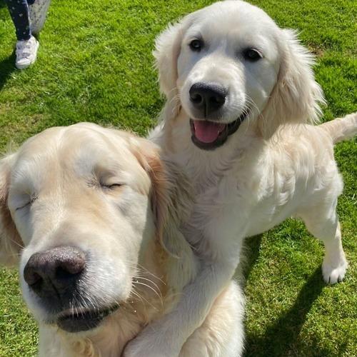 子犬が盲目の犬のためにガイド役になる03