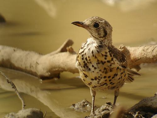 ひな鳥05