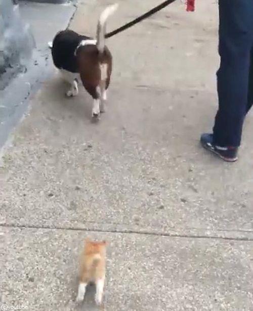 犬の散歩をしていたら迷子の子猫がついてきた06