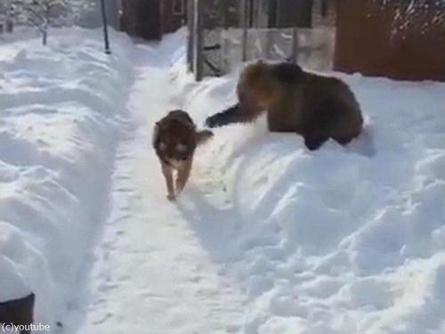 クマ「がおークマだぞぉー!」 犬「知ったこっちゃねー」03