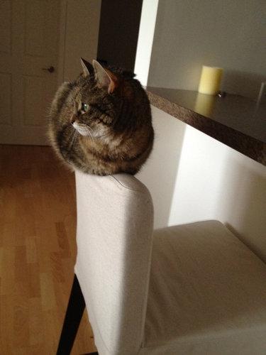 テトリス猫10
