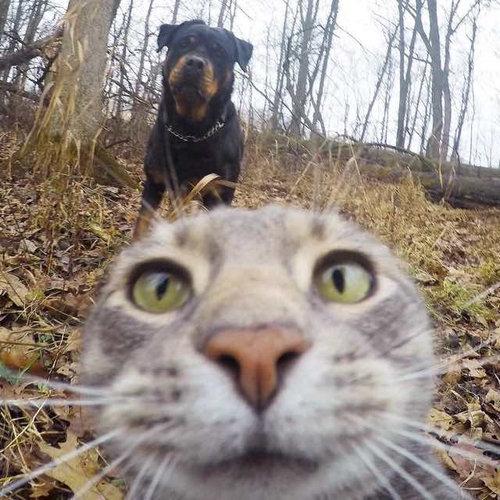 犬たちと一緒に自分撮りをする猫03