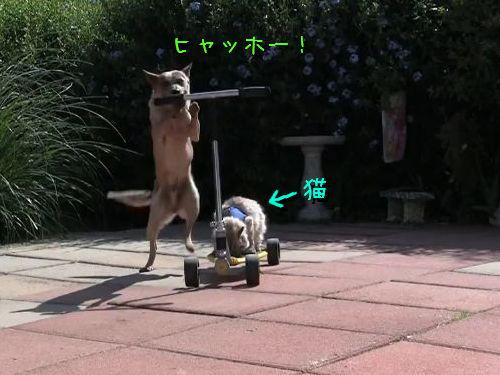 キックボードの犬と猫
