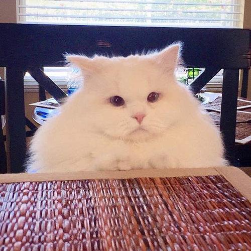 保護した子猫が、すばらしい毛並だった08
