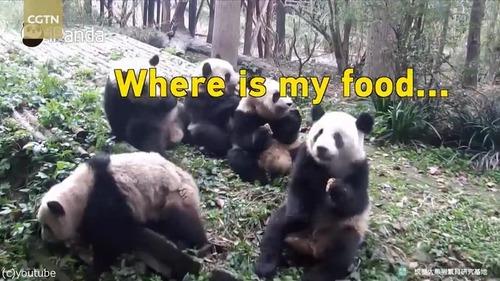 ドジっ子パンダ「おやつが見つからないの」02