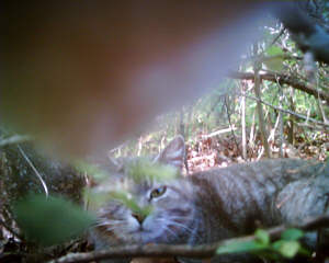 ネコ視点ではこう見える!ネコにカメラをつけて撮影02