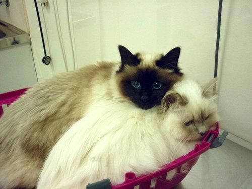 犬や猫が獣医に連れて行かれることを察知したとき09