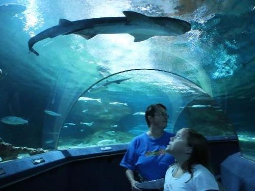 ニュージーランド国立水族館00