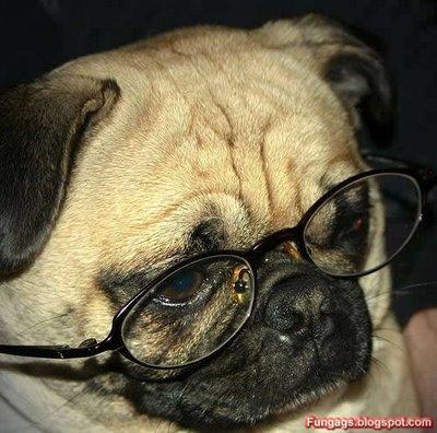 メガネ犬12
