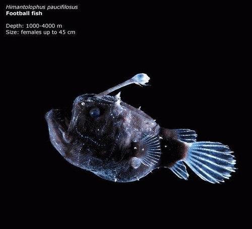 深海の生き物17