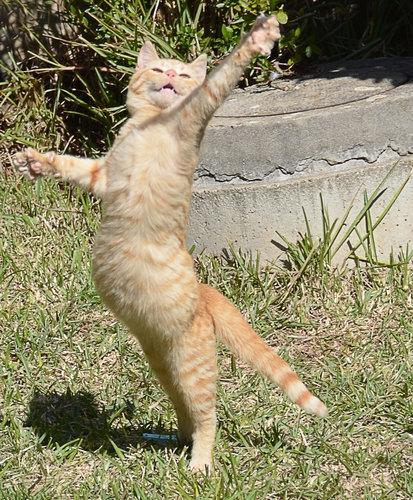 11Dance ダンス、踊る動物たち