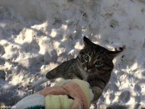 うちの猫の帰宅方法03