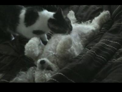 世界一幸せな犬と世界一献身的な猫の映像