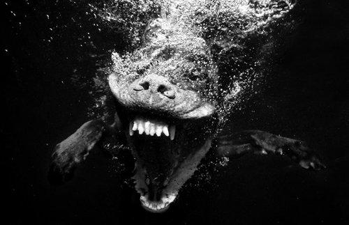 水中の犬10
