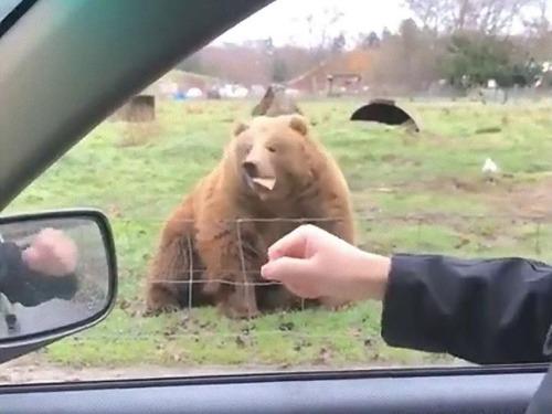 クマに食パンをフリスビーのように投げた04