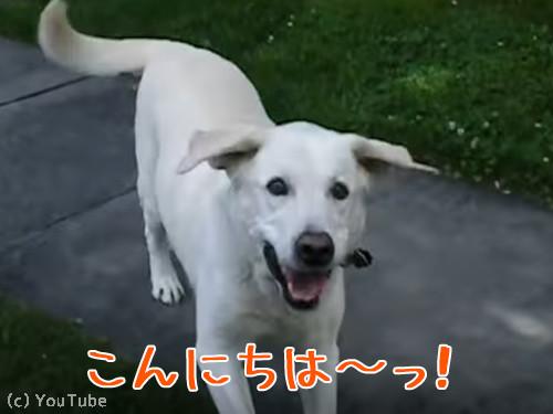 郵便受け取りをしてくれる犬00