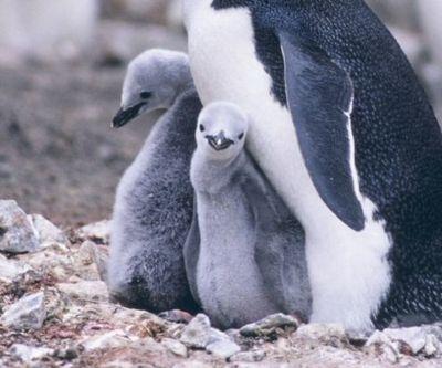 親子愛であふれる動物たち03