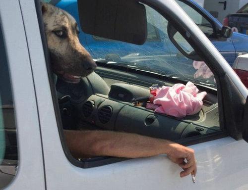 犬の決定的写真06