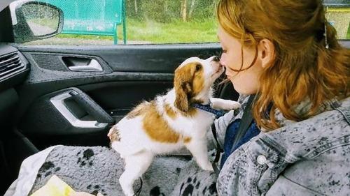 愛犬と初めて出会った日22