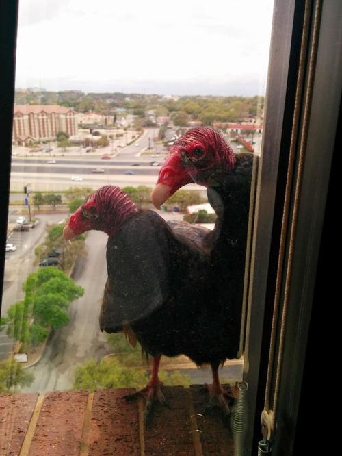 窓にやってきたお客さんたち02