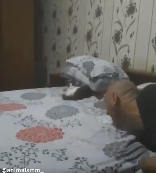 「遊んでニャ—」子猫の可愛すぎるアピール06