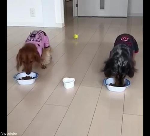 犬と並んでご飯を食べるインコ01