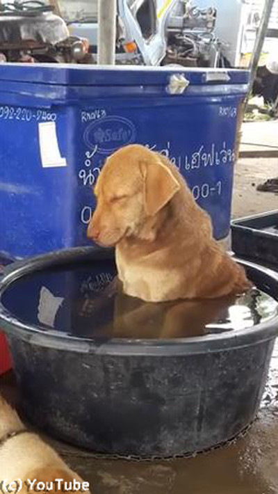「いい湯だワン…」01