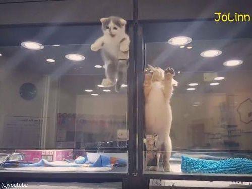 隣の犬に会いに行く猫03