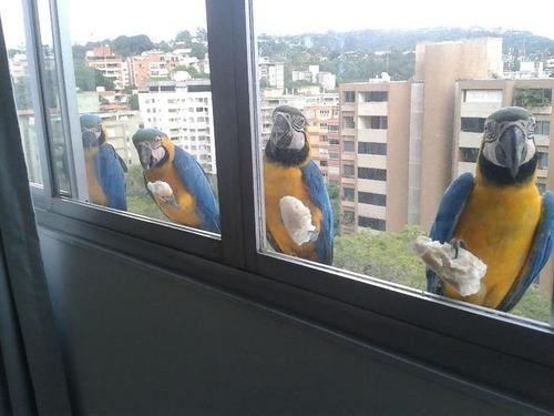 窓にやってきたお客さんたち00
