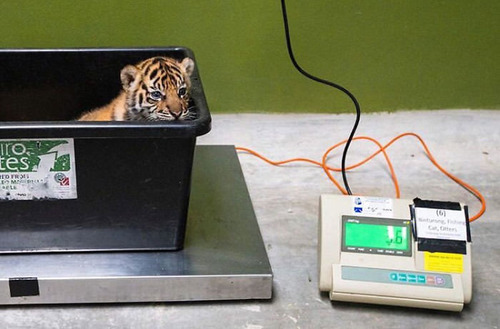 動物の体重の測り方21