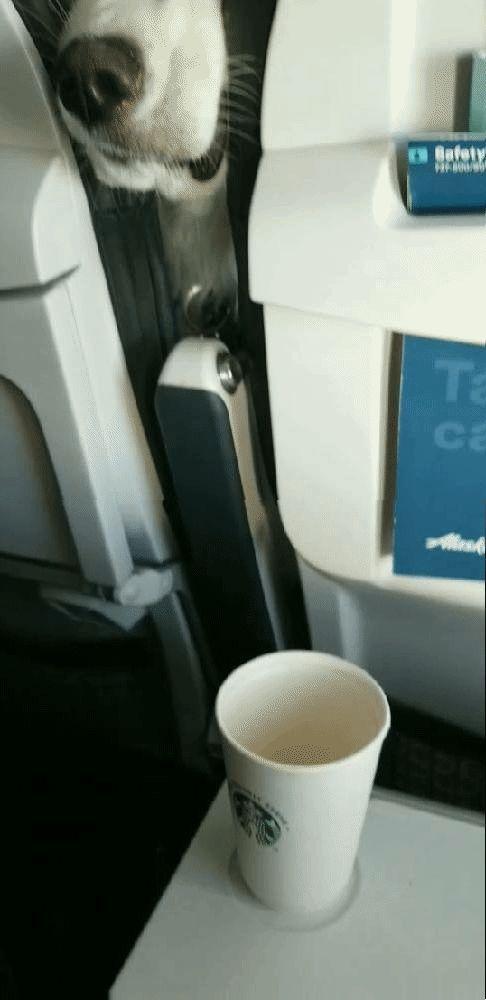 飛行機でスナックを分けるしかないとき03