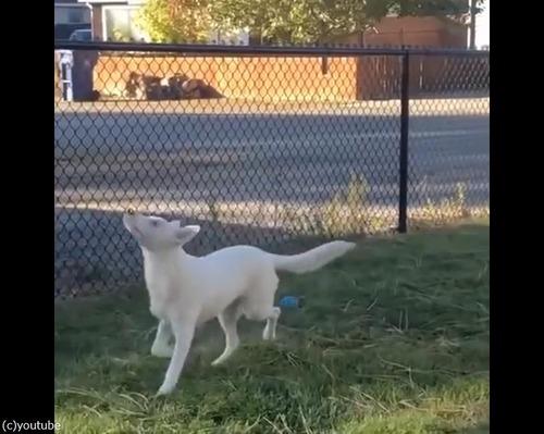 盲目で耳も聞こえないけれど…飼い主の存在はわかる02