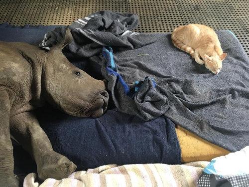 猫とサイが仲良し03