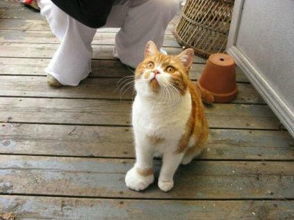 猫をぎゅーっとしたくなる写真10