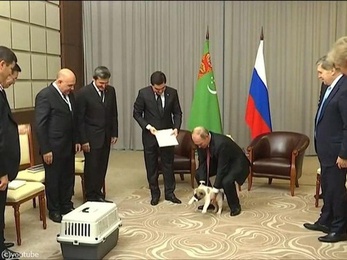 プーチンでさえ犬の正しい抱き方は知っている07