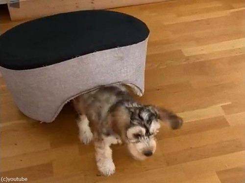 犬がベッドを逆さにすると03