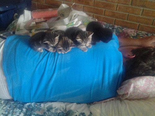 猫は素晴らしい13