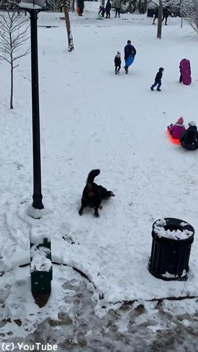 雪を愛してやまないワンちゃん01