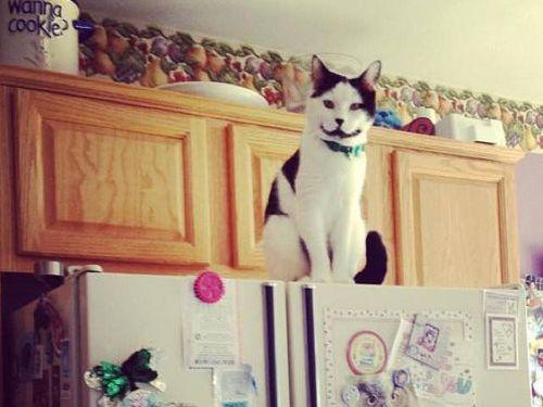 ハッピー猫01