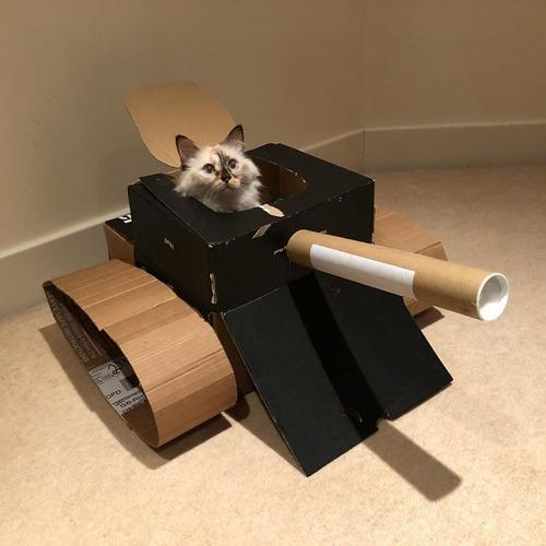 ダンボール猫戦車09