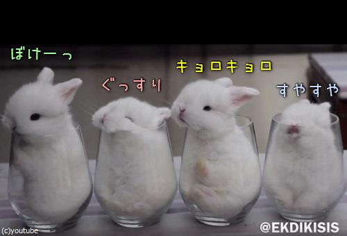 ガラスのコップとウサギ4匹00
