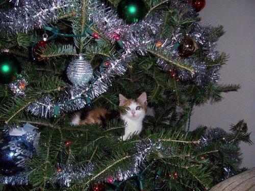 クリスマスとペット05