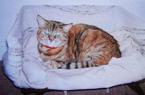 最高齢の猫07