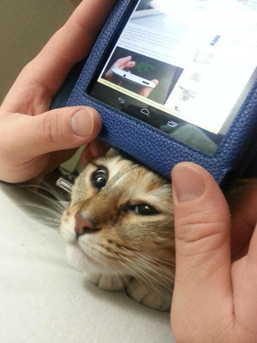 猫に生活を脅かされる22